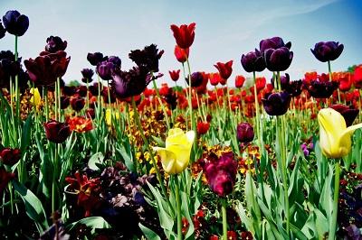 Море цветов для ваших женщин на floraexpress.ru