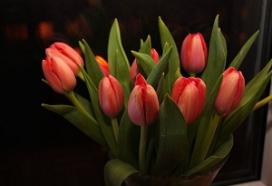 Даря тюльпаны, никогда не прогадаешь