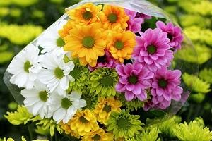Очаровательные разноцветные хризантемы идеально подходят для милого букета любимому учителю