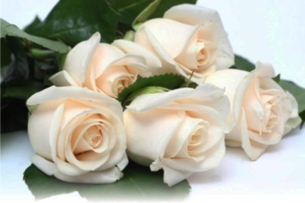 Букет из белых роз – универсальный цветочный презент