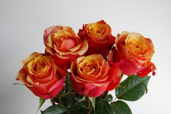 Букет из пяти оранжево-красных роз