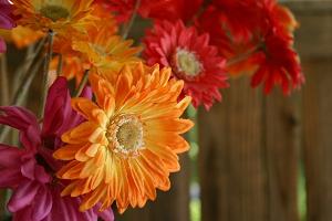 С яркими цветами и жизнь красочнее!