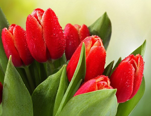 Нежный букет тюльпанов – отличная возможность напомнить о себе