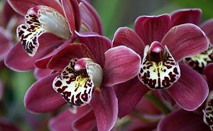 Орхидеи всегда притягивают взгляды