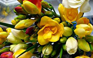 Хотите подарить радость? Пришлите букет цветов!