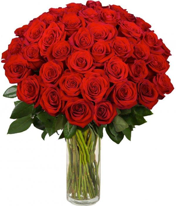 фото роз и букетов из роз