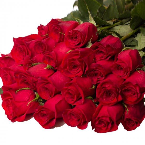 Картинки бордовые розы