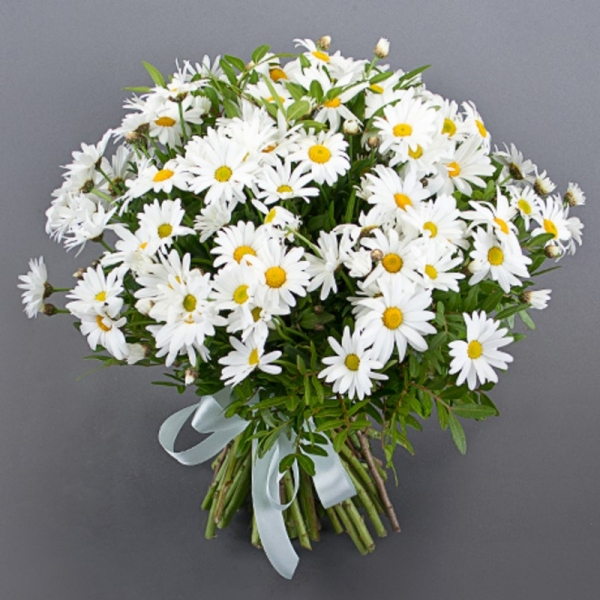 Фото цветов ромашки букет