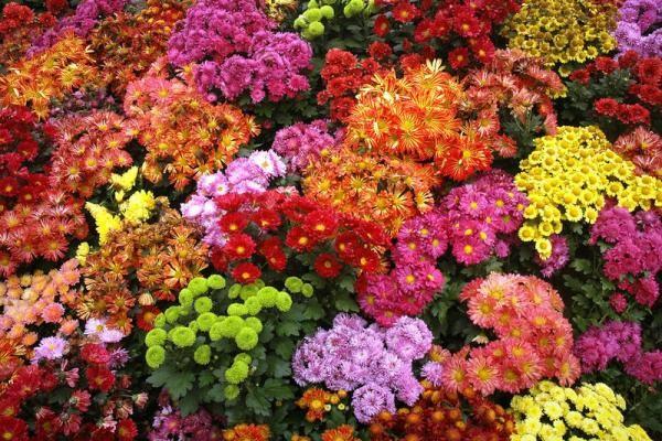 «Flora Express» Классика
